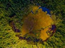 Vista aérea na floresta e no pântano em Celestynow no Polônia Fotografia de Stock