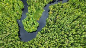 Vista aérea na floresta e no rio fotos de stock royalty free