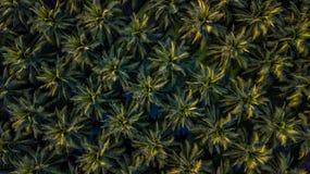 Vista aérea na plantação de árvores de coco fotos de stock