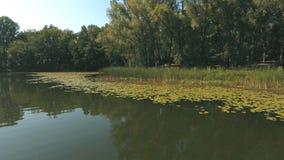 Vista aérea no lago das madeiras vídeos de arquivo