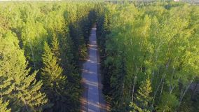 Vista aérea panorâmico na estrada de floresta de cima de Vídeo tomado usando o zangão Vista superior em árvores Maneira entre árv