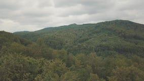 Vista aérea que voa sobre partes superiores verdes da árvore da floresta densa e sobre as montanhas video estoque