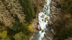 Vista aérea superior de un río rápido de la montaña que fluye en el agua pura de la montaña del bosque conífero del otoño en el n almacen de metraje de vídeo