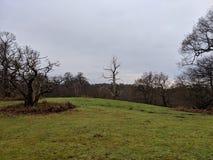 Vista abbellita dell'orizzonte degli alberi boscosi da schiarimento fotografia stock libera da diritti