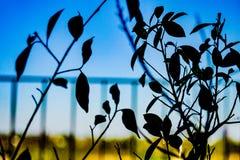 Vista abstracta de algunas ramas de árbol fotografía de archivo libre de regalías