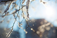 Vista abstrata da neve do inverno em ramos de árvore Fotos de Stock Royalty Free