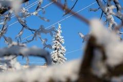 Vista abstrata da neve do inverno em ramos de árvore Foto de Stock