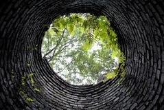 Vista acima da parte inferior do bem na floresta coberto de vegetação Fotografia de Stock Royalty Free