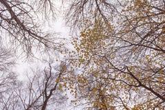 Vista acima em árvores e em ramos do outono Imagens de Stock