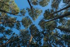 Vista acima em árvores em uma floresta em Tailândia imagens de stock