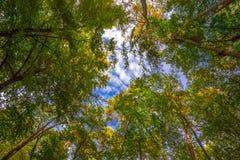 Vista acima em Autumn Forest Fotos de Stock Royalty Free