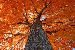 Vista acima em cores da queda Imagem de Stock Royalty Free