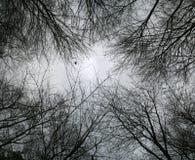 Vista acima em filiais de árvore desencapadas Fotografia de Stock Royalty Free