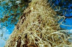 Vista acima em uma árvore imagens de stock