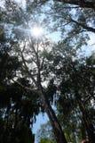 Vista acima em uma floresta Fotos de Stock Royalty Free
