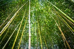 Vista acima em uma floresta de bambu imagens de stock