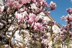 Vista acima na árvore de florescência foto de stock royalty free