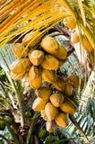 Vista acima na palma de coco Imagem de Stock