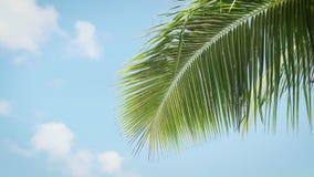 Vista acima na palmeira com o sol que brilha completamente filme