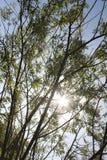 Vista acima nas árvores foto de stock