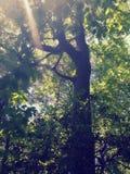 Vista acima nas árvores imagem de stock