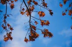 Vista acima nas folhas alaranjadas imagens de stock
