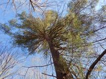 Vista acima no céu foto de stock