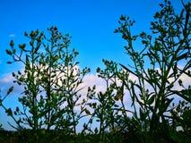 Vista acima no céu azul com fundo da nuvem com natural imagem de stock