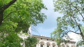 Vista acima no céu azul com a nuvem através dos ramos de árvores vídeos de arquivo