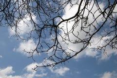 Vista acima para as primeiras folhas verdes da mola fotos de stock royalty free