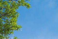 Vista acima para esverdear as folhas fotos de stock