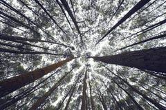 Vista acima sob as árvores Fotos de Stock Royalty Free