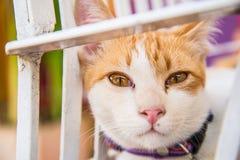 Vista adorabile di un gatto Immagine Stock