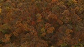 Vista aerea alla foresta di autunno video d archivio