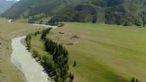 Vista aerea, bella vista del fiume della montagna nel giorno solare nelle montagne di Altai, Russia stock footage