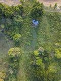 Vista aerea calda della foresta della luce del sole di estate immagine stock libera da diritti