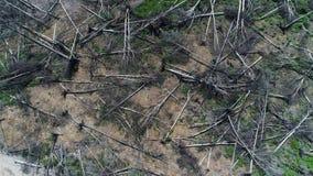 Vista aerea che sorvola la foresta distrutta del taglio archivi video