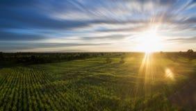 vista aerea dal giacimento della canna da zucchero del fuco con la natura l del cielo di tramonto Fotografia Stock