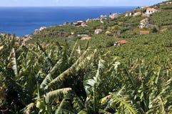 Vista aerea degli alberi da frutto, del villaggio e dell'Oceano Atlantico Immagini Stock Libere da Diritti