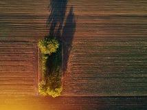 Vista aerea degli alberi nel campo nel tramonto Fotografie Stock Libere da Diritti