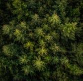 Vista aerea degli alberi in una foresta fotografie stock libere da diritti