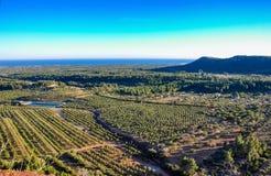 Vista aerea degli oliveti in Mont-Roig del Camp (Spagna) Fotografie Stock Libere da Diritti