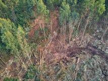 Vista aerea dei boscaioli che tagliano gli alberi nella foresta fotografie stock