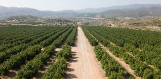 Vista aerea dei boschetti dell'agrume fotografia stock libera da diritti