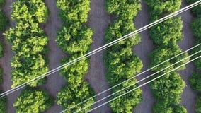 Vista aerea dei campi arancio e delle linee elettriche video d archivio