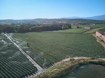 Vista aerea dei campi crescenti del tabacco in La Vera, Estremadura spain Spruzzatori che innaffiano i campi di tabacco immagini stock libere da diritti