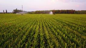 Vista aerea dei campi di grano che sono irrigati con l'azienda agricola concentrare del cereale del sistema del perno su vasta sc archivi video