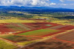 Vista aerea dei giacimenti dell'ananas e delle palme in Oahu Hawai Fotografia Stock Libera da Diritti
