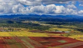 Vista aerea dei giacimenti dell'ananas e delle palme in Oahu Hawai Fotografia Stock
