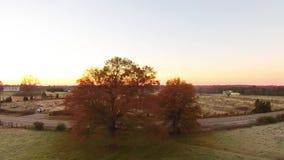 Vista aerea dei paesaggi e degli alberi video d archivio